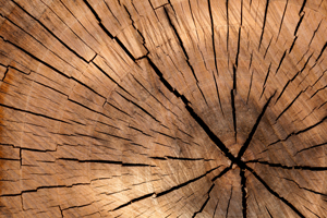 tree_stump_texture_206765